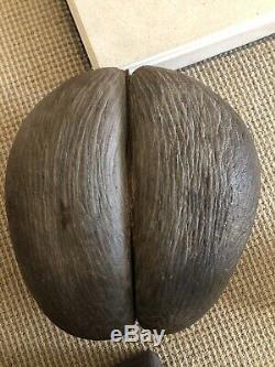 Vintage Antique Rare Original Coco De Mer Nut Seed