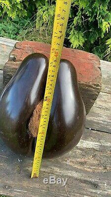 Vintage Antique Rare Original Coco De Mer Seychelles Double Nut Seed