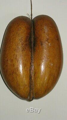Anciennes Rare Originale Coco De Mer Nut Seed